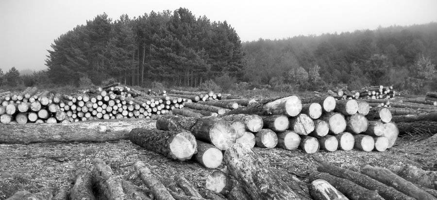 Elio-Brailovsky_deforestacion-agronegocios