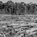 """""""Destruir un bosque para que hagan negocios es absolutamente condenable"""""""