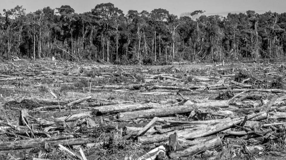 Elio-Brailovsky_deforestacion-incendios