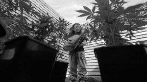 #Amparate: cómo autocultivar cannabis terapéutico y no caer preso