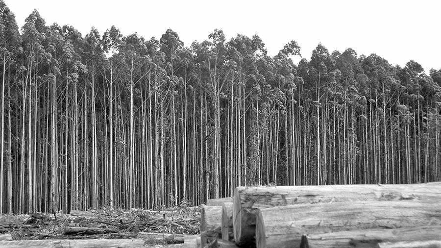 deforestacion-pasteras-misiones