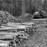 En Misiones, los árboles mueren de pie