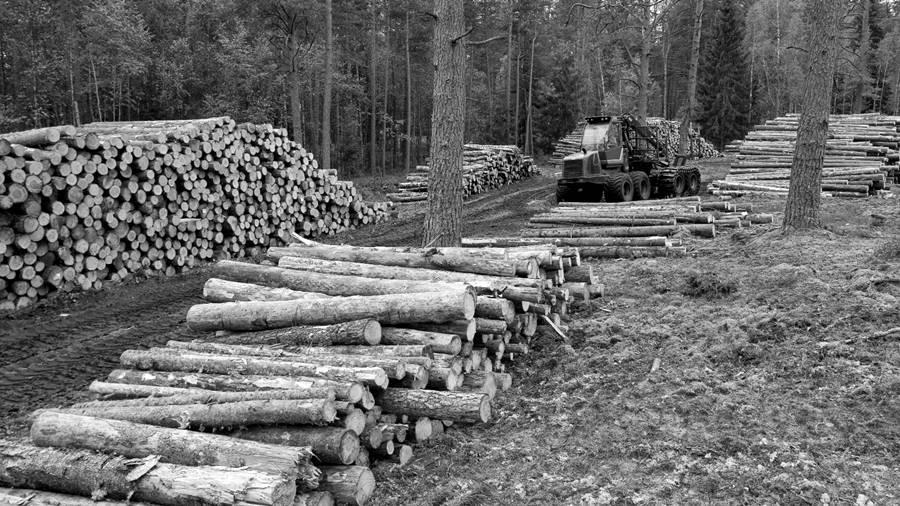 deforestacion-pasteras-misiones3