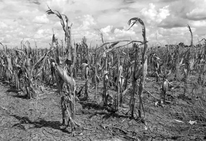 agroecologia-campo-agronegocios-sequia-saberes