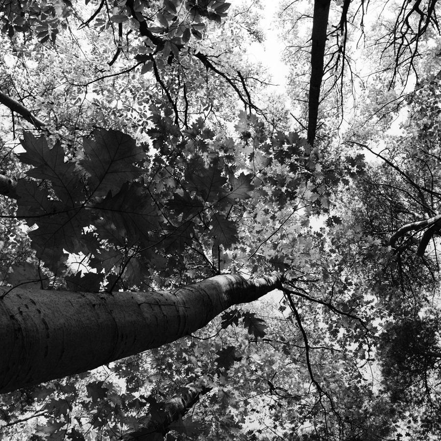 otono-hojas-arboles-amarillo-paisaje