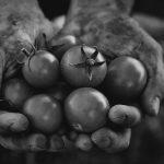 Encuentro de agricultura biodinámica: alimentos que dan fuerza vital