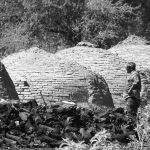 Carbón: el desafío de conservar el monte y promover el desarrollo social