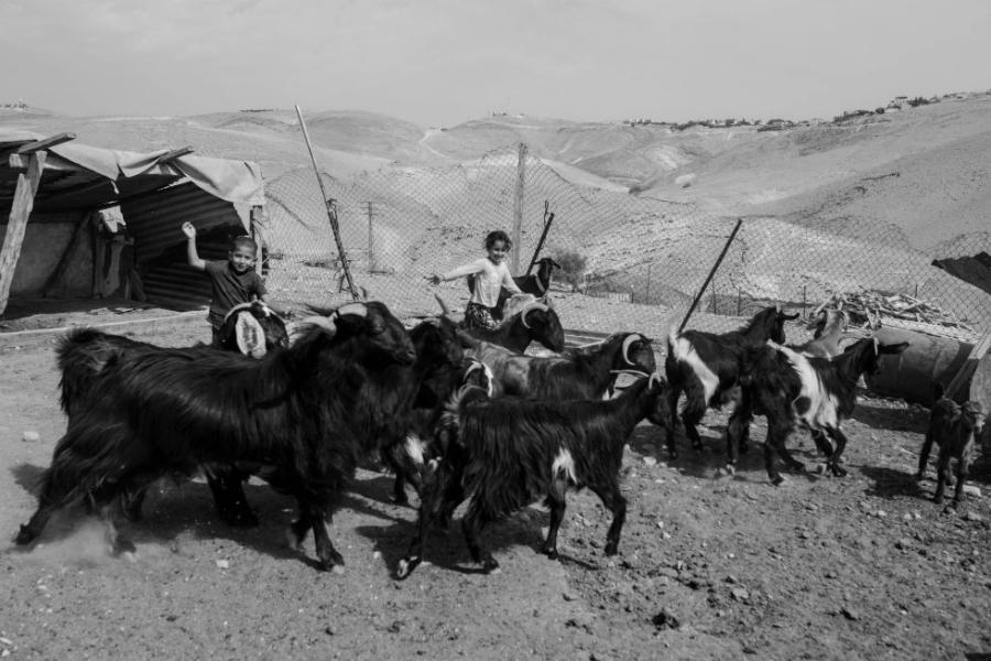 Palestina-cabras-economía-la-tinta