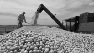 El 'boom' de la soja en Argentina y Paraguay