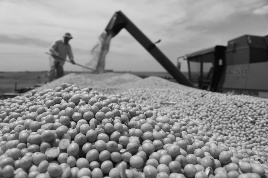 Paraguay-soja-produccion-la-tinta