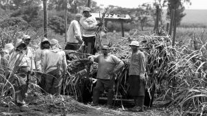 Política agraria-campesinos: ¿caminos que se bifurcan?