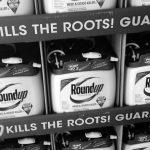 Fallo histórico: Monsanto condenado en un juicio por cáncer en EE.UU.