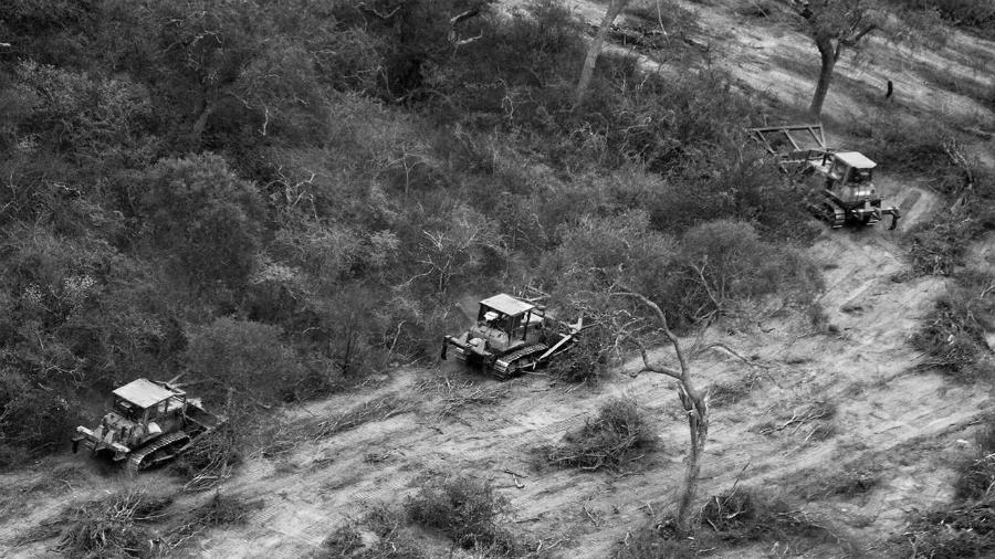 Paraguay-desmonte-chaco-la-tinta
