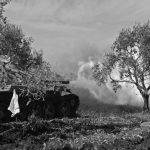 Turquía saquea las tierras kurdas en Siria