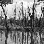 La estrecha relación entre los paraísos fiscales y el cambio climático
