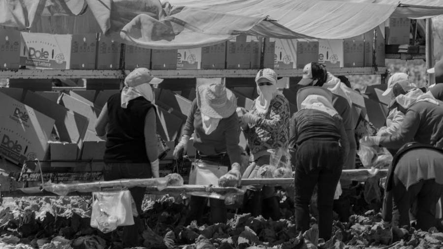 Estados Unidos Watsonville migrantes la-tinta