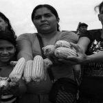 El Maizal: la fuerza de la estrategia comunera en Venezuela