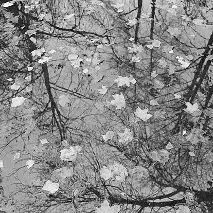 Agua-hojas-arbol.jpg