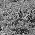 """Agustín Barbera, agrónomo del INTA: """"La agroecología rompe el mito de que producir con fertilizantes y herbicidas es más eficiente"""""""
