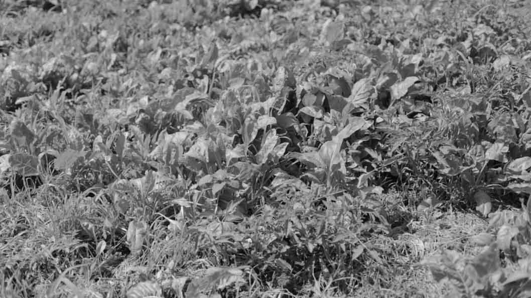 Colectivo-Manifiesto-agroecologia-campo-produccion-plantaciones