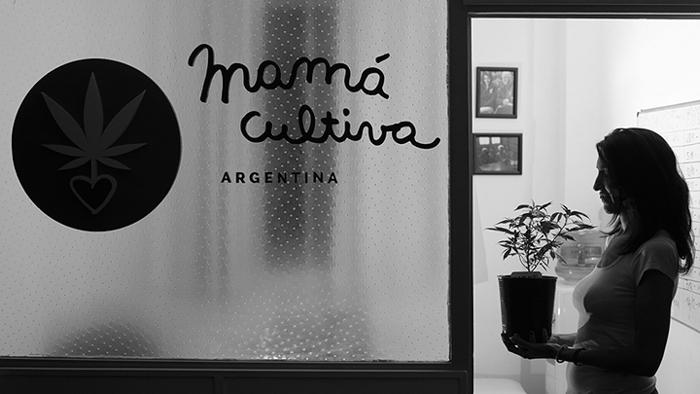 mama cultiva argentina