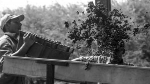 Una comunidad calchaquí fundó la primera bodega gestionada por indígenas