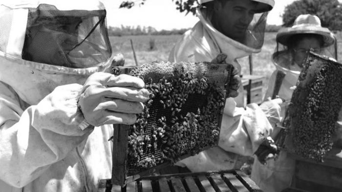 colmena abeja miel apicultura