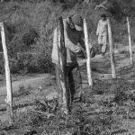 El Pajarito, o la lucha por una tierra propia
