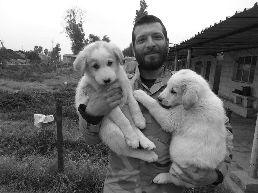 Kurdistan Orsetti perros la-tinta