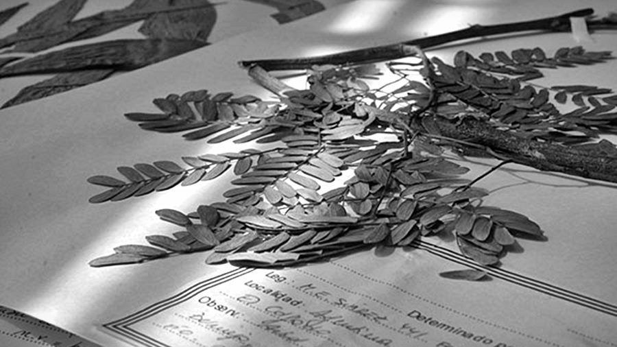 vademecum-hierbas-medicinales-wichi