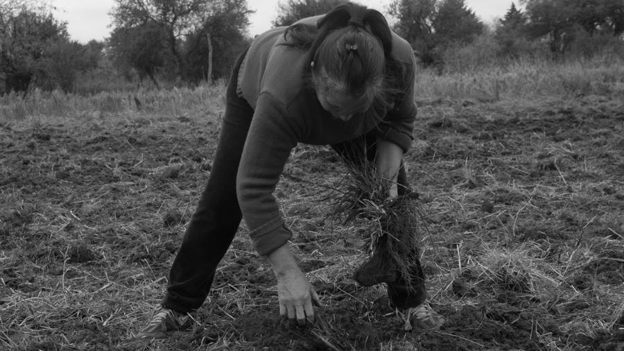 Siembra-campo-personas-sembrando-semillas-agroecologia-colectivo-manifiesto-04