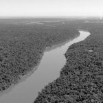 """""""El fondo de un río que desemboca en el Paraná tiene más glifosato que un campo de soja"""""""