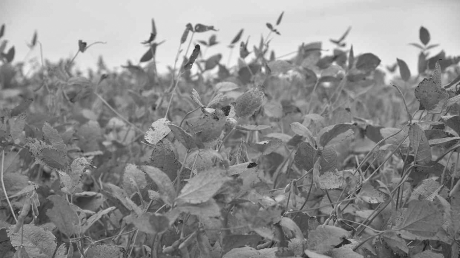 cosquin-agrotoxicos-agroquimicos-agro-plantacion-soja