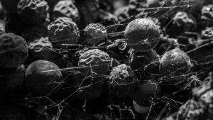 Poesía Ambiente: una propuesta estética, poética, política