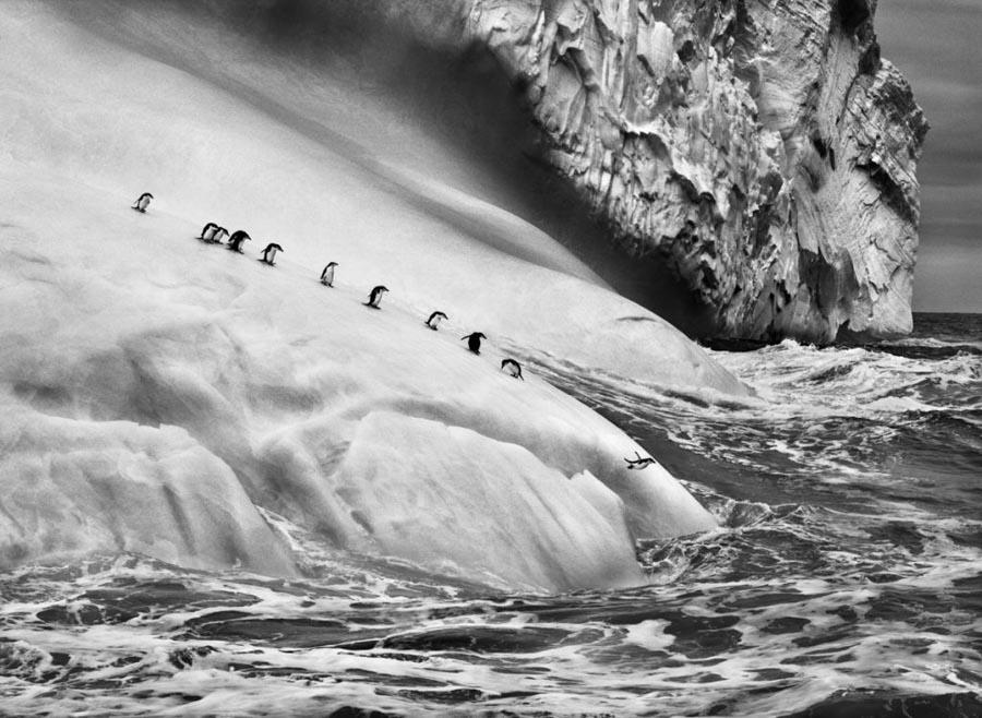 00-Genesis_Pinguinos-barbijos