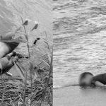 Dos fotos hablan de la misma tragedia: El rechazo a los migrantes