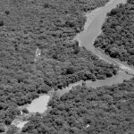 El bosque: fuente de alimentos, de remedios, de vida