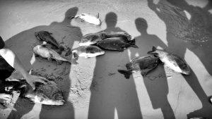 Desastre ambiental en el Litoral por el apagón: murieron miles de peces