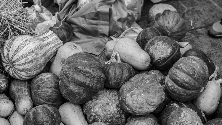Alimentazo campesinos agroecologia