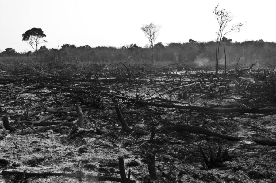 Mexico Peninsula de Yucatan deforestacion masiva la-tinta