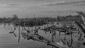Agronegocio: Industria depredadora en la Península de Yucatán