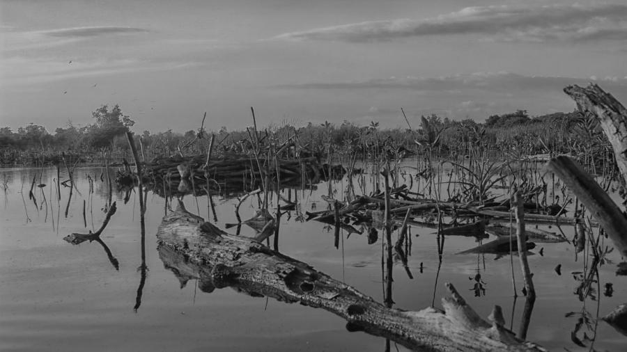 Mexico Peninsula de Yucatan manglares la-tinta