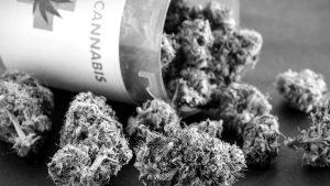 Primer cultivo científico de cannabis medicinal en Argentina