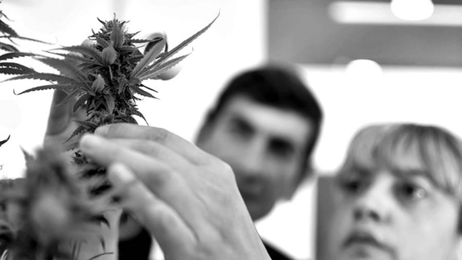 cannabis-medicinal-argentina-cepa2