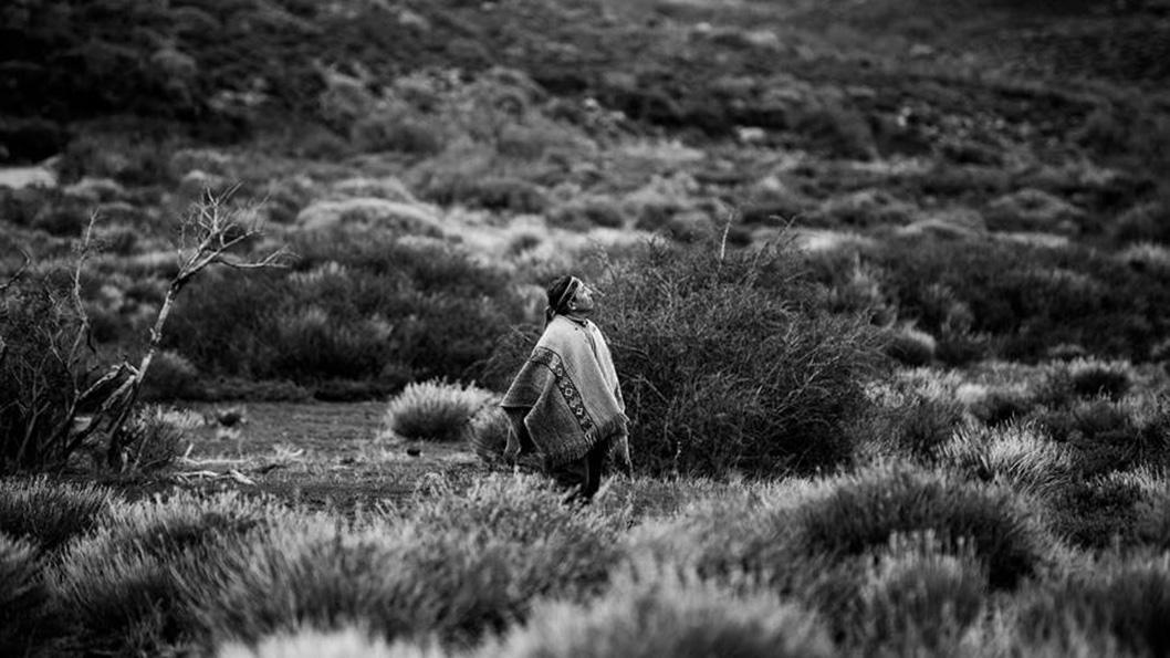 maldonado-mapuches