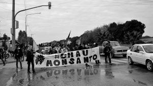 Estado, Monsanto y transgénicos: condenas en EE.UU, y a la espera de un fallo de la Corte en Argentina