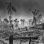 """""""El fuego no está sólo en el Amazonas, sino que Brasil entero está en llamas"""""""
