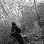 Incendios de Bosques Nativos: un daño gravísimo para todo el planeta y la humanidad
