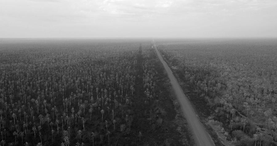 Bolivia Chiquitania incendios bosques la-tinta