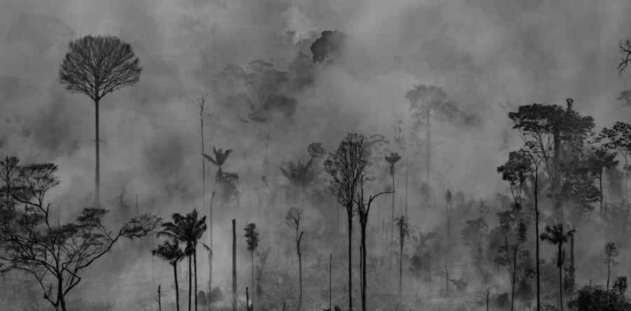 Brasil Amazonas incendio naturaleza la-tinta